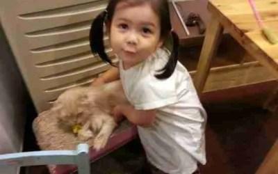 Jian at the Cat Cafe