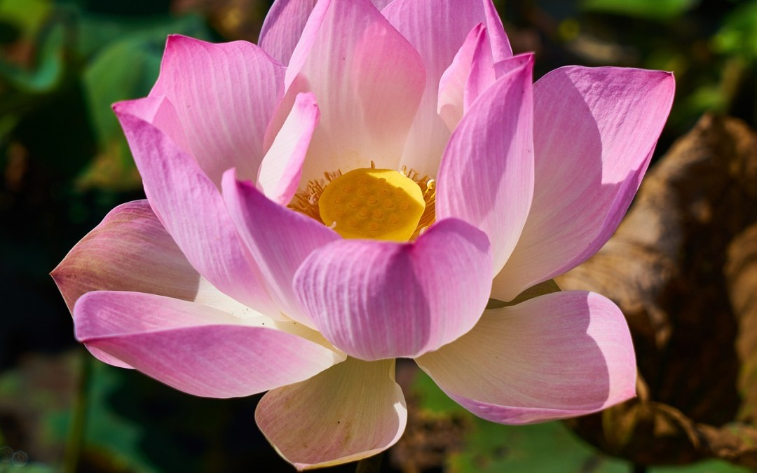 152 – Lotus Sutra 3: This Means YOU – The Lost Son Parable