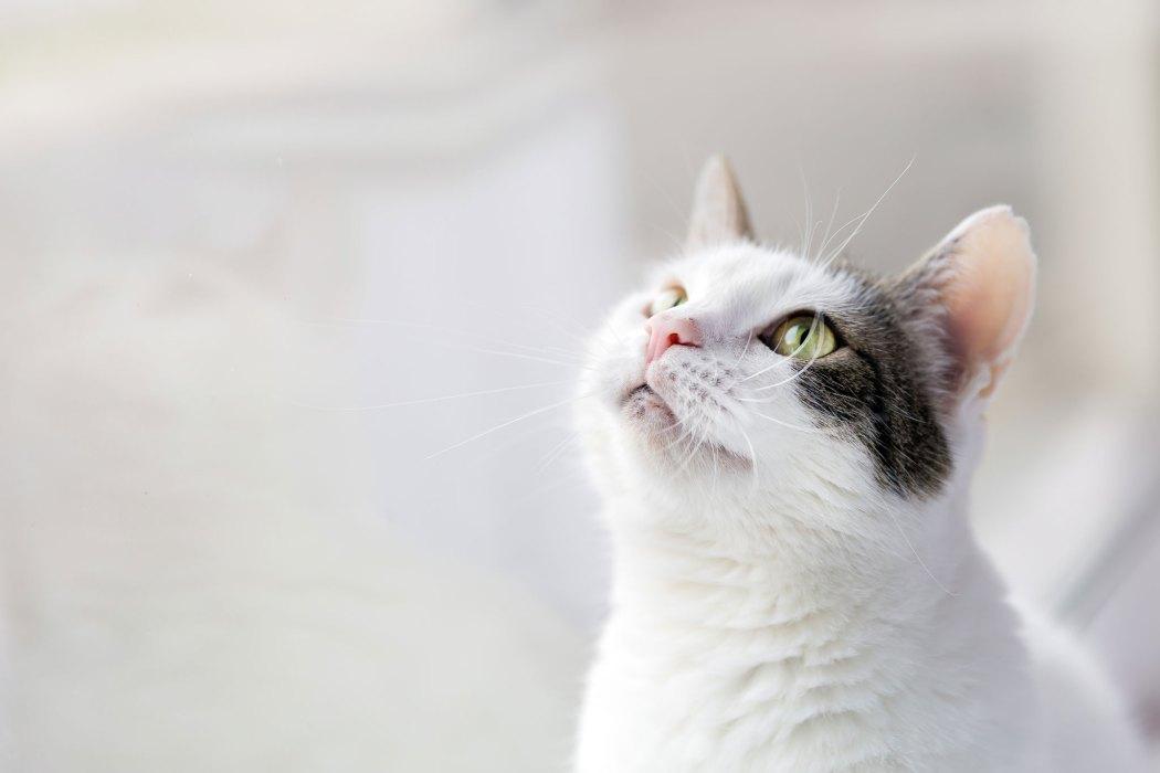 Chronische Nierenerkrankung (CNE) Katze