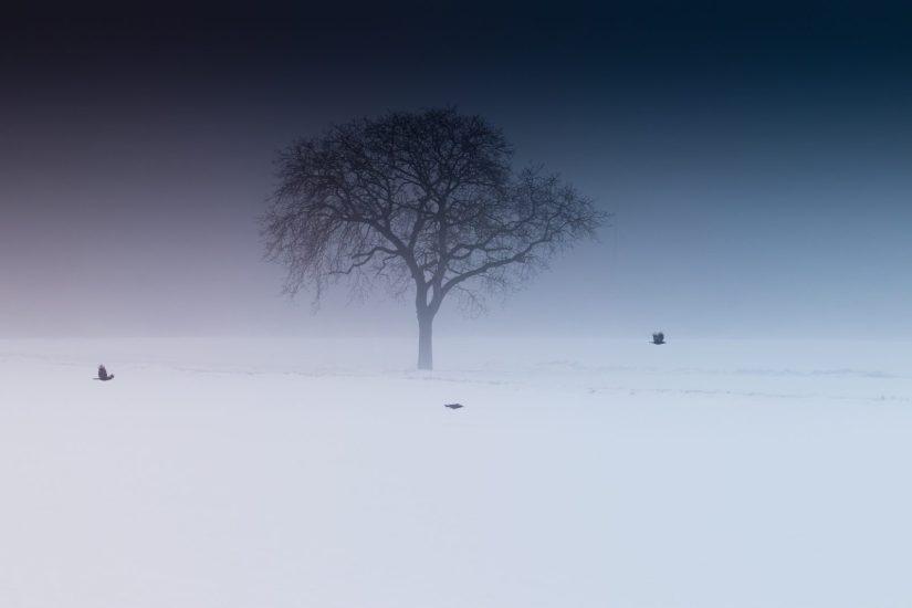 心生菩提樹 平凡之中體悟真理