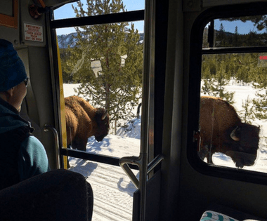 How to enjoy a snow day in Yellowstone