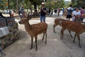 Deers everywhere