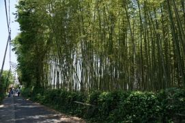 This part of Arashiyama Bamboo Grove after the train tracks is less crowded