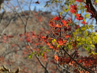 Autumn foliage with Hallasan in the background