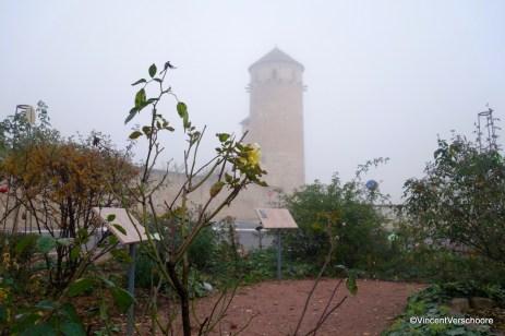 La Roseraie, Cluny
