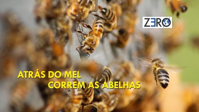 ATRÁS DO MEL CORREM AS ABELHAS