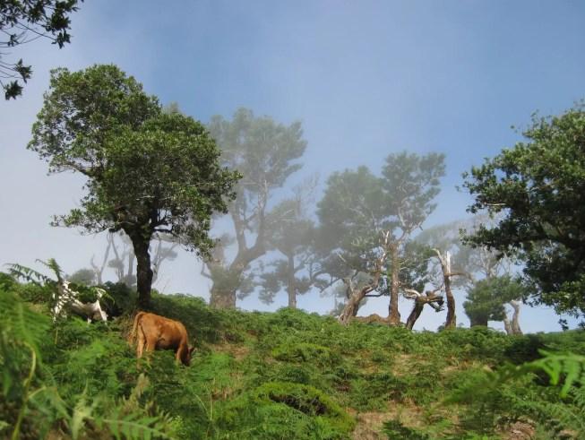 Projeto da estrada das Ginjas é um atentado ao património natural da Madeira, dizem 9 ONG de Ambiente