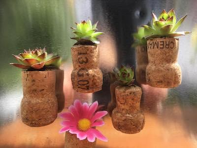 Mini-pots aimantés plantes grasses