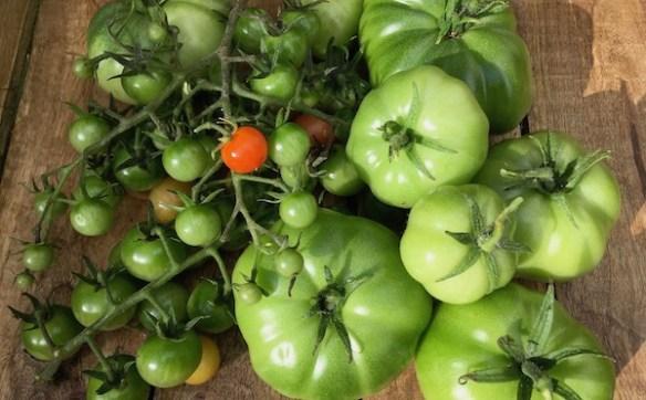 Recettes tomates vertes