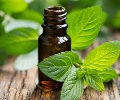 Peppermint Essential Oil for Muscle Pain