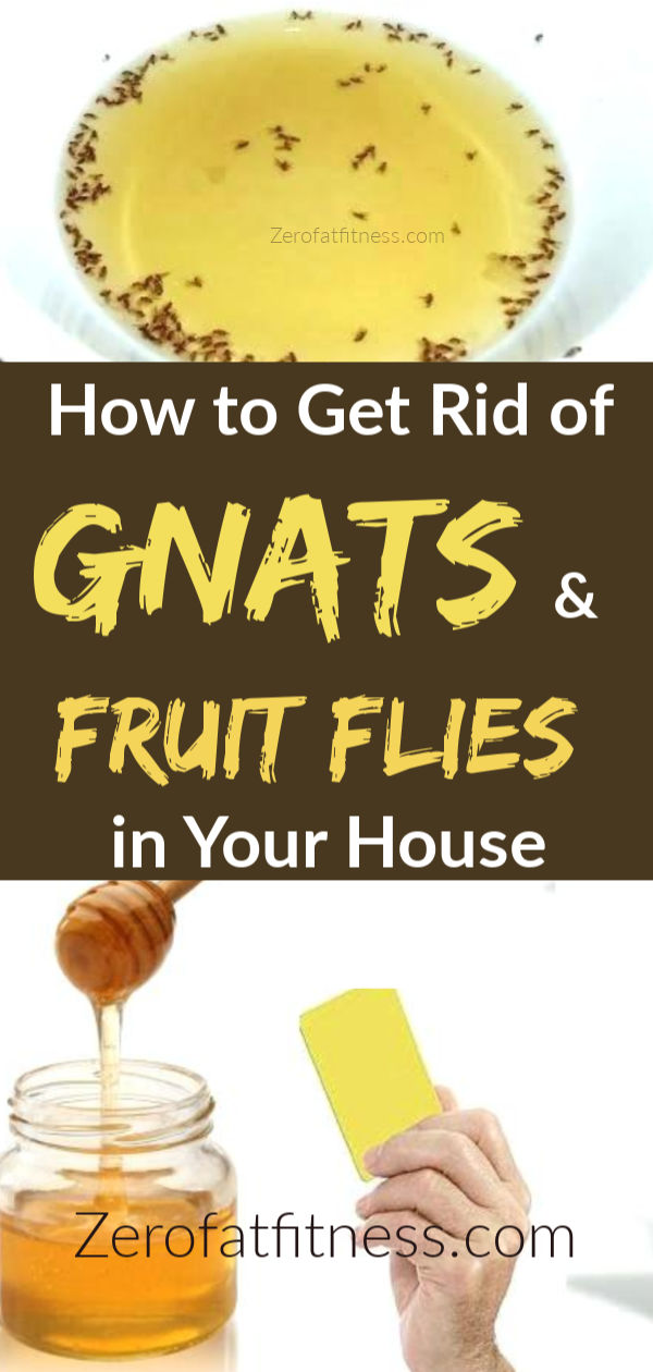 How To Get Rid Of Gnats And Fruit Flies 12 Home Remedies