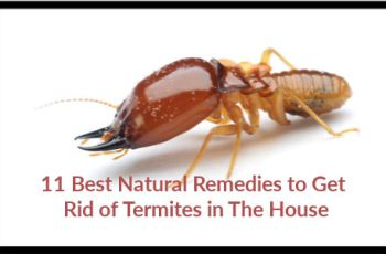 11 Best Natural Remedies to Get Rid of Termites in The House