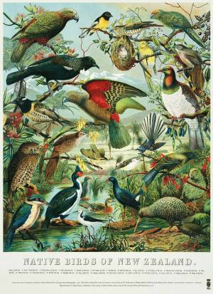 9402_Native_Birds_of_NZ_Poster