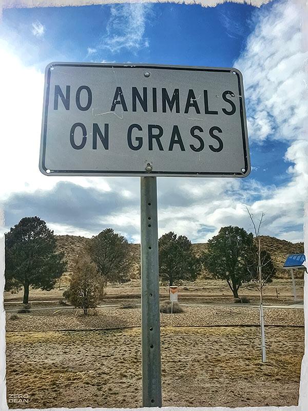 no-animals-on-grass-zero-dean