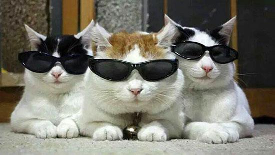 sunglasses-cats