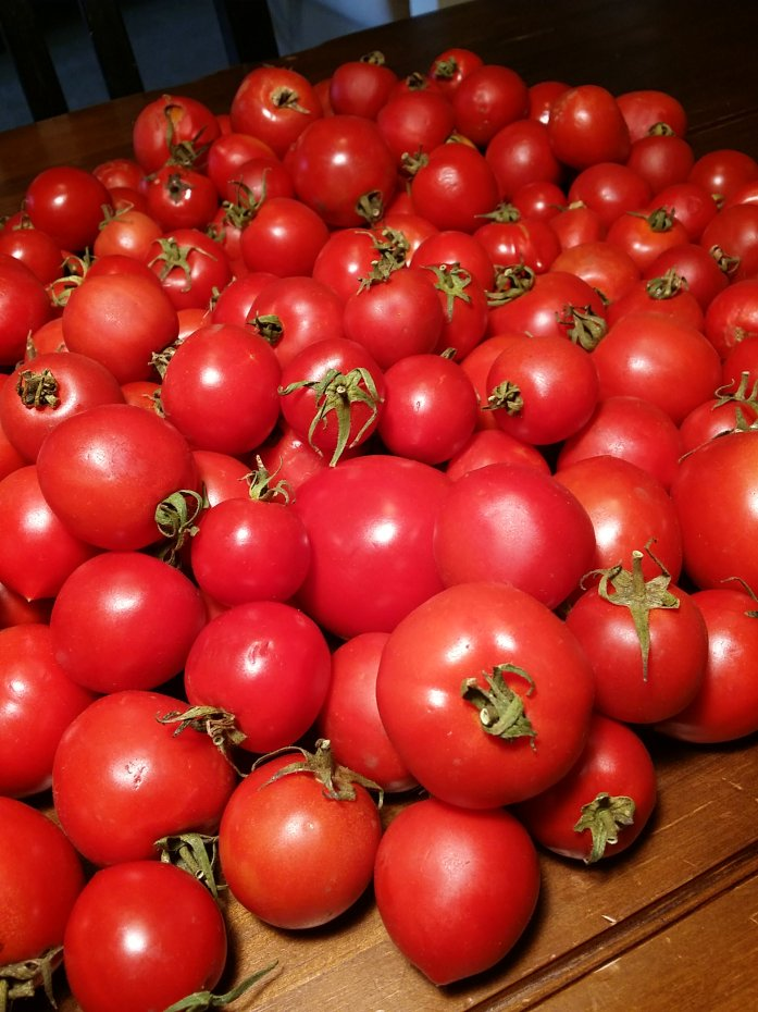 ugly tomatoes