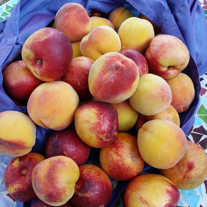 nectarines and peaches