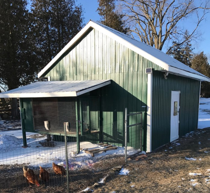 backyard chickens and their deluxe hen house