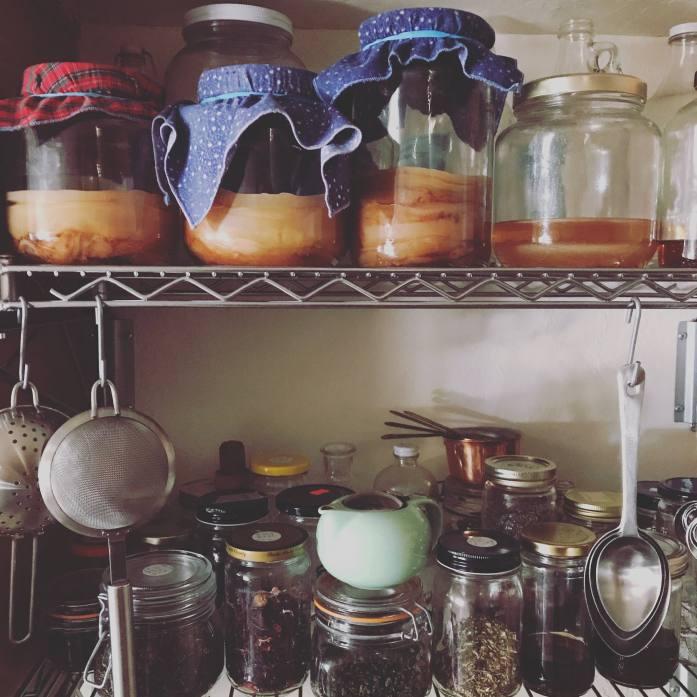jars of kombucha scobys