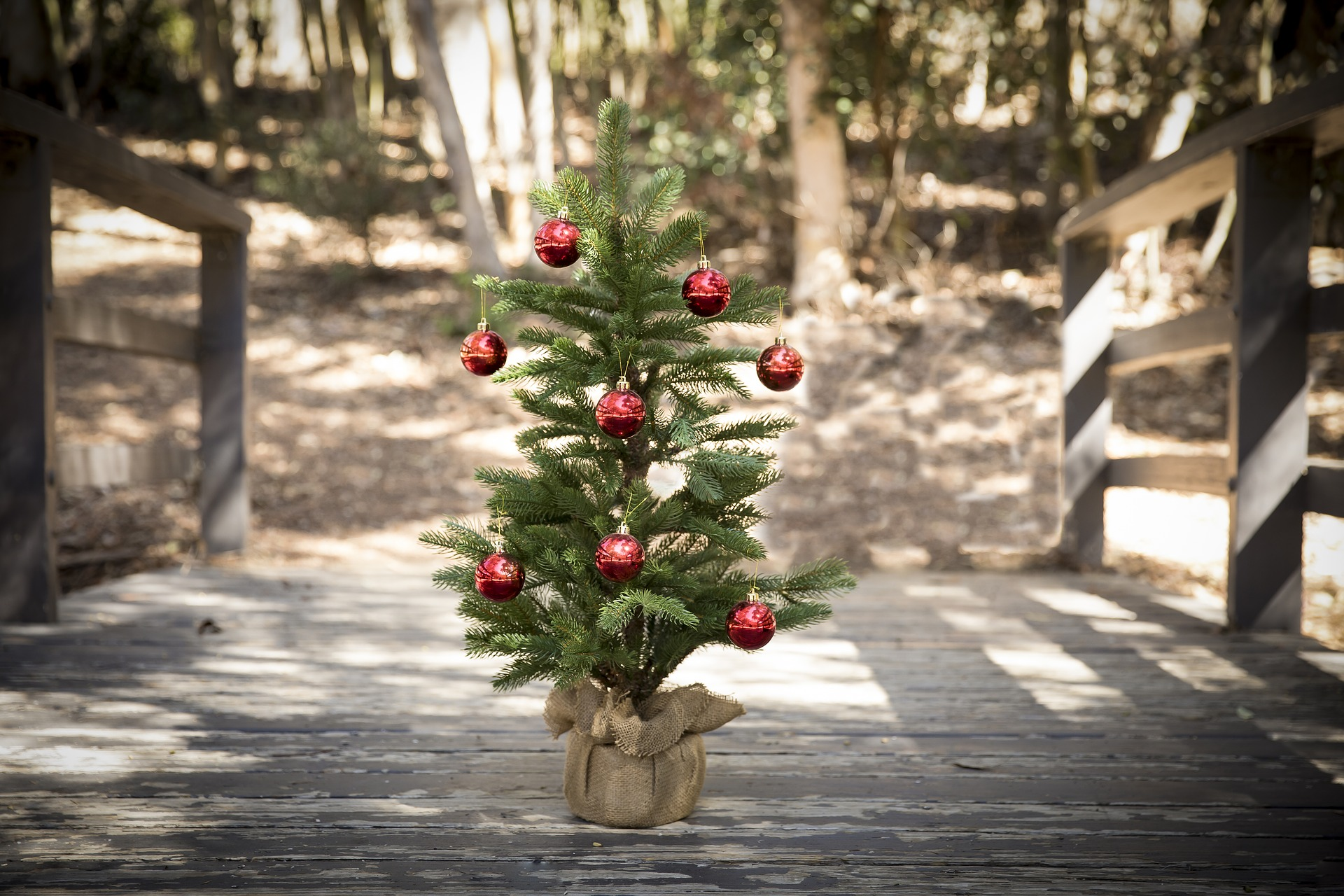 Recycling Artificial Christmas Tree In Abilene Tx 2021 8 Ways To Recycle Your Real And Fake Christmas Trees Zero Waste Nerd