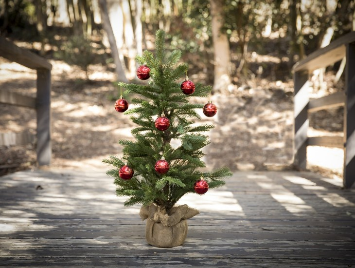 8 ways to recycle your real and fake christmas trees - Chicago Christmas Tree Recycling