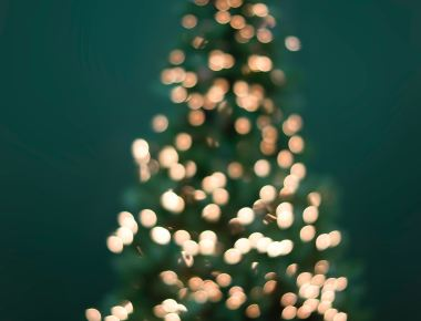 Eco-Friendly Christmas Tree Options