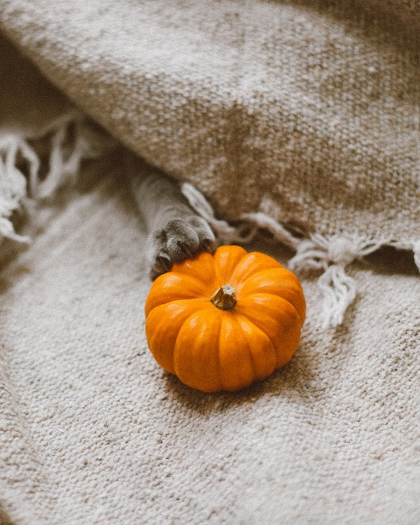 Tips for an Eco-Friendly Halloween - Zero Waste Nest
