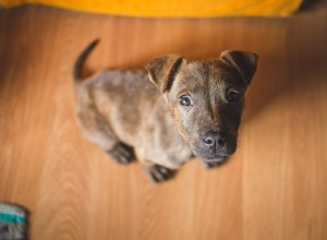 Dogs and Apartment Life: What to Consider