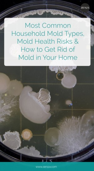How to Get Rid of Mold in Your Home - Guide to Household Mold Types and Health Risks