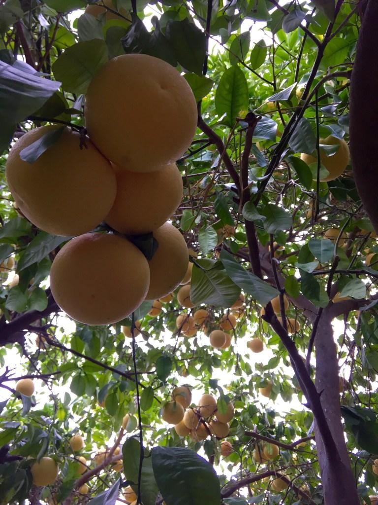 Avocado & Citrus Salad | Zestful Kitchen