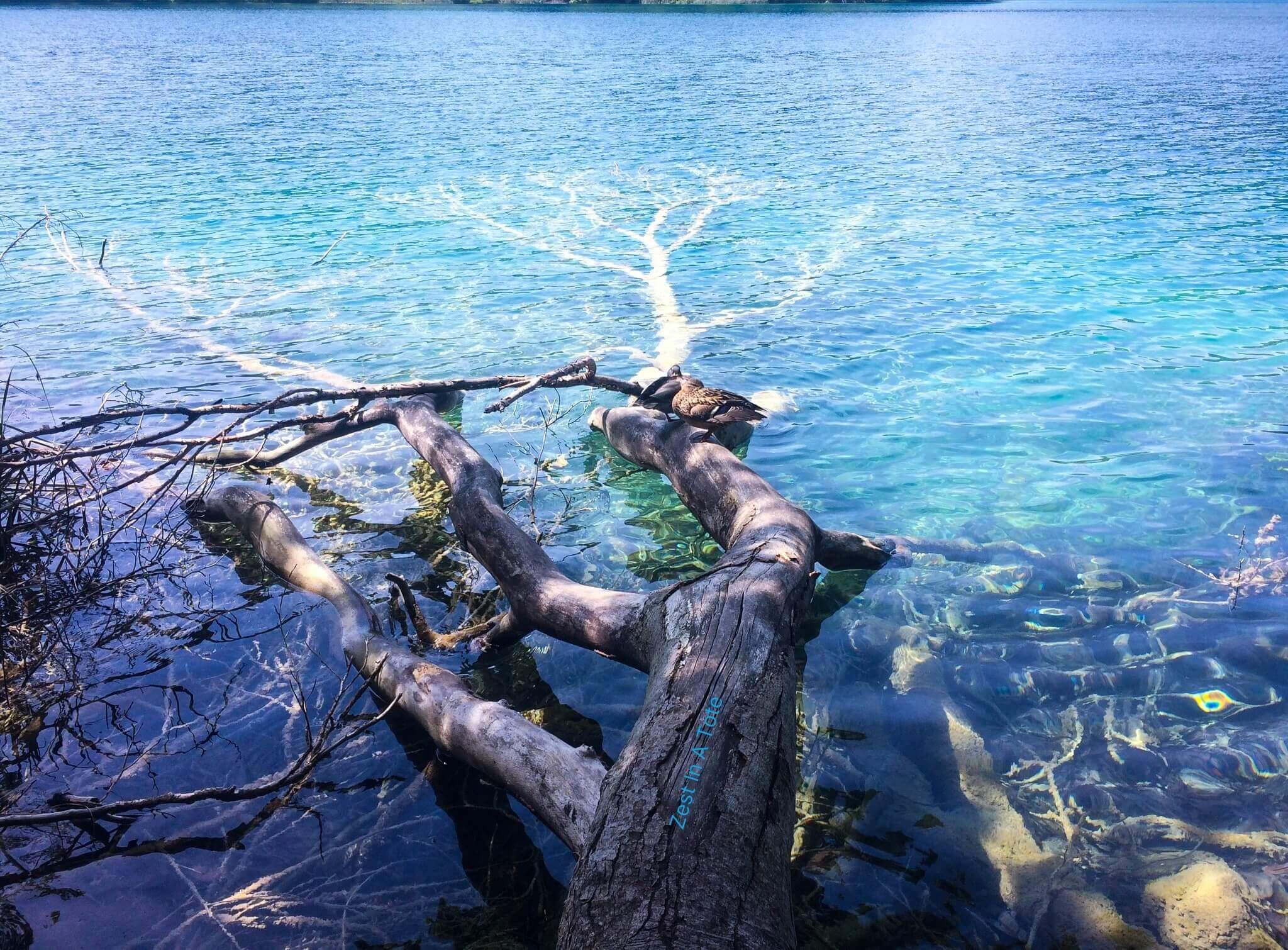 Serene walk along Plitvice Lakes