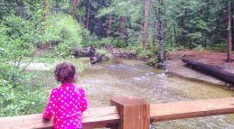 Forest trailsFeaturedImage