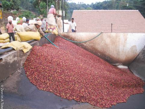 Coffee Bean Washing