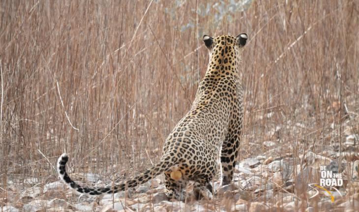wildlife safari in india, wildlife sanctuaries in india, national parks in india