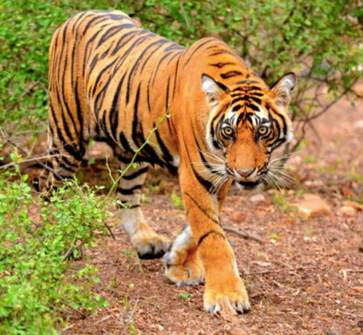 wildlife safari in india, wildlife sanctuaries in india, national parks in india