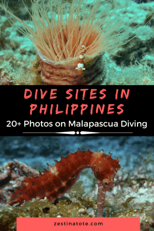 Malapascua offers some of the best dive sites in Philippines. See this Photo Log to spark your wanderlust for Scuba Diving in Philippines. #philippines #adventure #malapascua #cebu #scubadiving #bestdivesitesphilippines #divinginphilippines