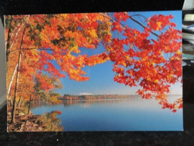 Vintage Postcard Uncirculated Unposted Brilliant Fall Colors Along The Lake