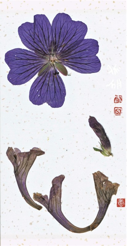 bookmark made of dried blossoms