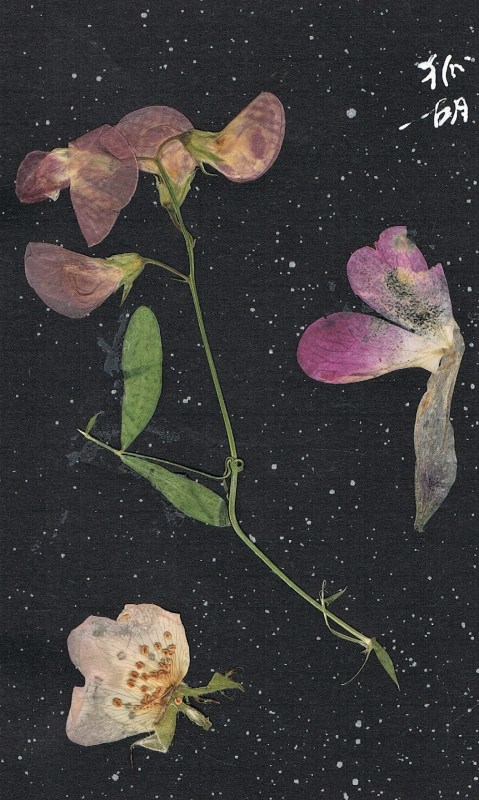 bookmark made of pressed blossoms