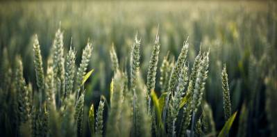 Campagnes, champ de blé