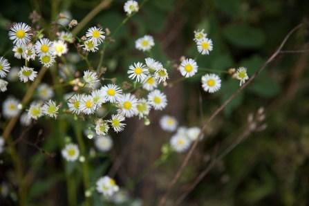 Fleurs Montagnes04