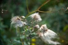 Fleurs Montagnes26