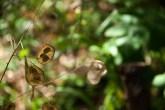 Fleurs Montagnes38