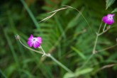 Fleurs Montagnes39