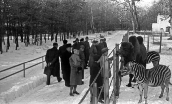 Zoološki vrt: Zebre, deve, timaritelji i posjetitelji, oko 1955.