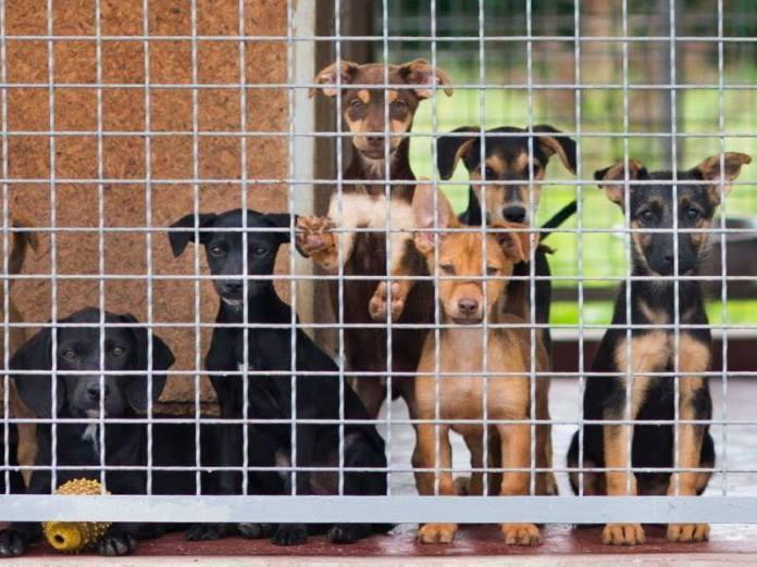 Kolovoz 2019. – mjesec s najviše udomljenih pasa u povijesti Skloništa u Dumovcu