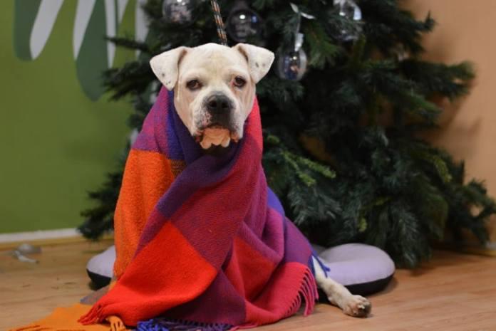 AKCIJA SKLONIŠTA DUMOVEC: Bacite keksić umjesto petarde, poštedite pse infarkta