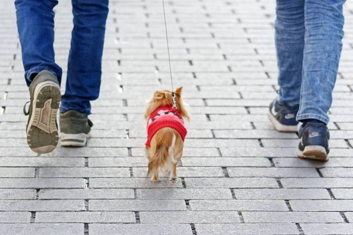 Pas - šetnja s psom