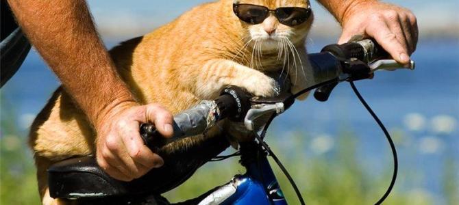 Спорядження для велопроходу. Мінімум