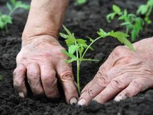 Adopt a Garden adopt a garden Adopt a Garden gardeners handwash shutterstock 768 300x225